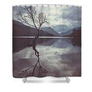 Lone Tree At Llyn Padarn Shower Curtain