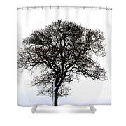 Lone Tree In Field Shower Curtain by John Short
