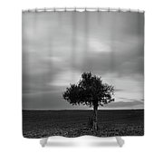 Lonely Olive Tree In A Green Field  And  Moving Clouds Shower Curtain