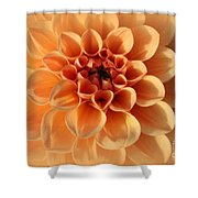 Lovely In Peaches And Cream - Dahlia Shower Curtain