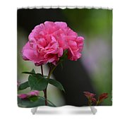 Lovely Pink Rose Shower Curtain