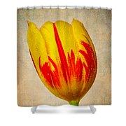 Lovely Textured Tulip Shower Curtain