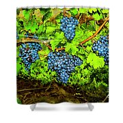 Lucious Grapes Shower Curtain