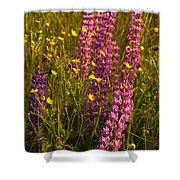 Lupins And Buttercups Shower Curtain
