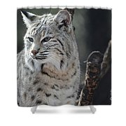 Lynx Looking Around At His Environment Shower Curtain