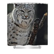 Lynx Perched In A Tree Shower Curtain