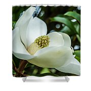 Magnolia Bloom IIi Shower Curtain