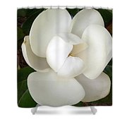 Magnolia Blossom Shower Curtain
