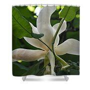 Magnolia Macrophylla Shower Curtain