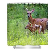 Maine White Tailed Deer Shower Curtain