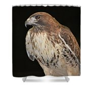 Majestic Hawk Shower Curtain