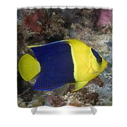 Malaysia Marine Life Shower Curtain by Dave Fleetham - Printscapes