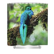 Male Quetzal Shower Curtain