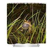 Male Toad Shower Curtain