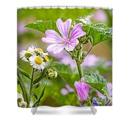 Malva And Chamomile In The Meadow Shower Curtain