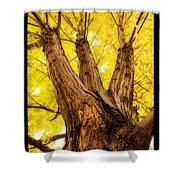 Maple Tree Portrait 2 Shower Curtain