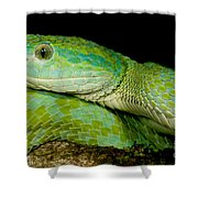 Marchs Palm Pitviper Shower Curtain