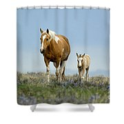 Mare And Foal Shower Curtain