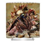 Marine Hermit Crab Shower Curtain