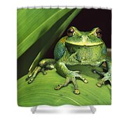 Marsupial Frog Gastrotheca Orophylax Shower Curtain