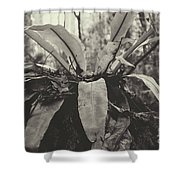 Mary Cairn Cross Reserve Shower Curtain