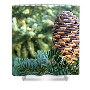 Masterful Construction - Spruce Cone Shower Curtain