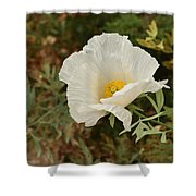 Matilija Poppy I Shower Curtain