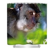 Mauritian Cynomolgus Macaques In The Wild Shower Curtain