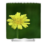 Meadow Salsify Shower Curtain