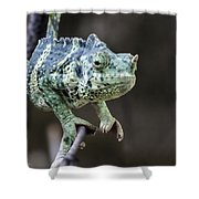 Mellers Chameleon Portrait Shower Curtain