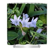Mexican Clover Shower Curtain