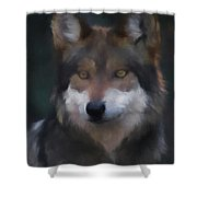 Mexican Grey Wolf Da Shower Curtain
