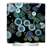 Microscopic View Of Diatoms Shower Curtain