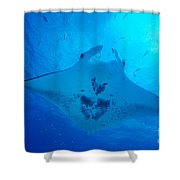 Midway Atoll, Manta Ray Shower Curtain