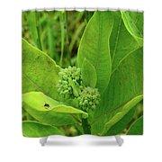 Milkweed Flower Buds  Shower Curtain