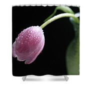 Misty Shower Curtain by Tracy Hall