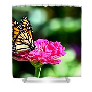 Monarch Butterfly On Pink Flower Shower Curtain
