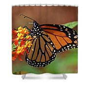 Monarch On Milkweed Shower Curtain