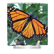 Monarch - Perfection Shower Curtain