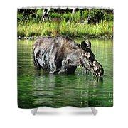 Moose In The Elk Creek Beaver Ponds Shower Curtain