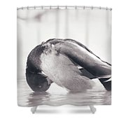 Morning Bath Shower Curtain