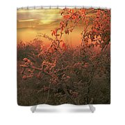 Morning Frost Shower Curtain
