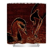 Mother Swan And Cygnet Shower Curtain