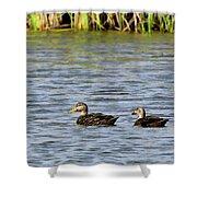 Mottled Ducks Shower Curtain