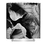 Mounts Botanical Garden 2363 Shower Curtain