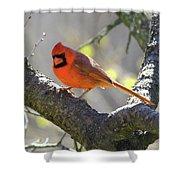 Mr Northern Cardinal Shower Curtain