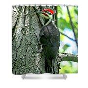 Mr. Pileated Woodpecker Shower Curtain