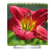 Scarlet Bloom Shower Curtain
