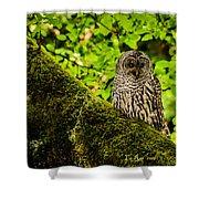 Muir Woods Owl Shower Curtain