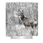 Mule Deer In Winter In The Pike National Forest Shower Curtain